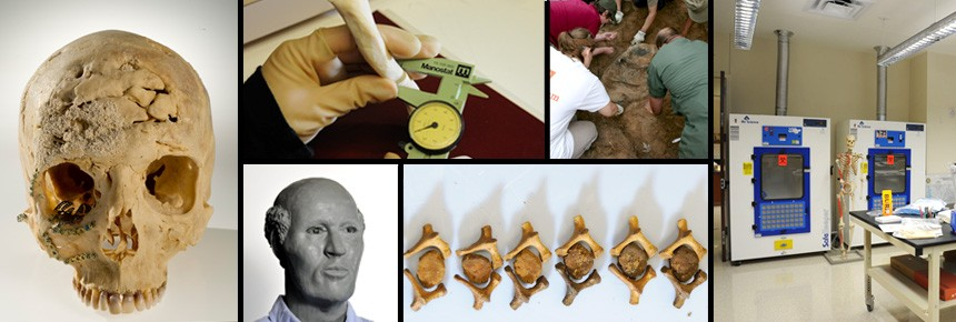 Human identification artifacts